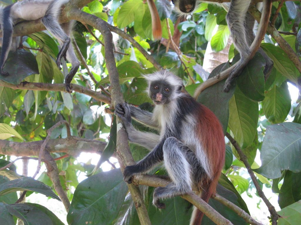 Foresta di Jozani Zanzibarviaggi -